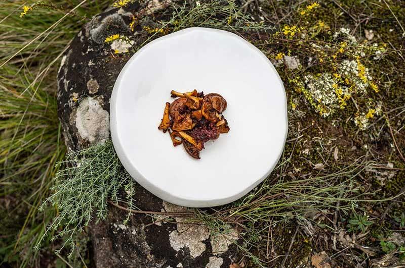Plato de alta cocina en el bosque con rovellones